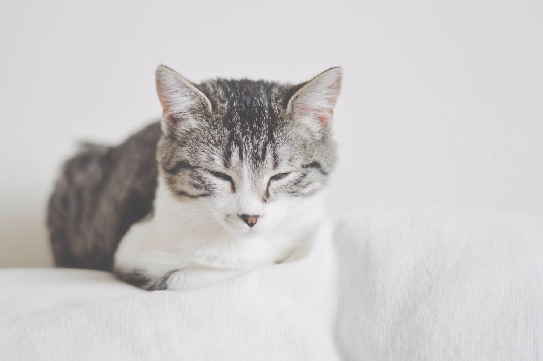 cuty-kitten