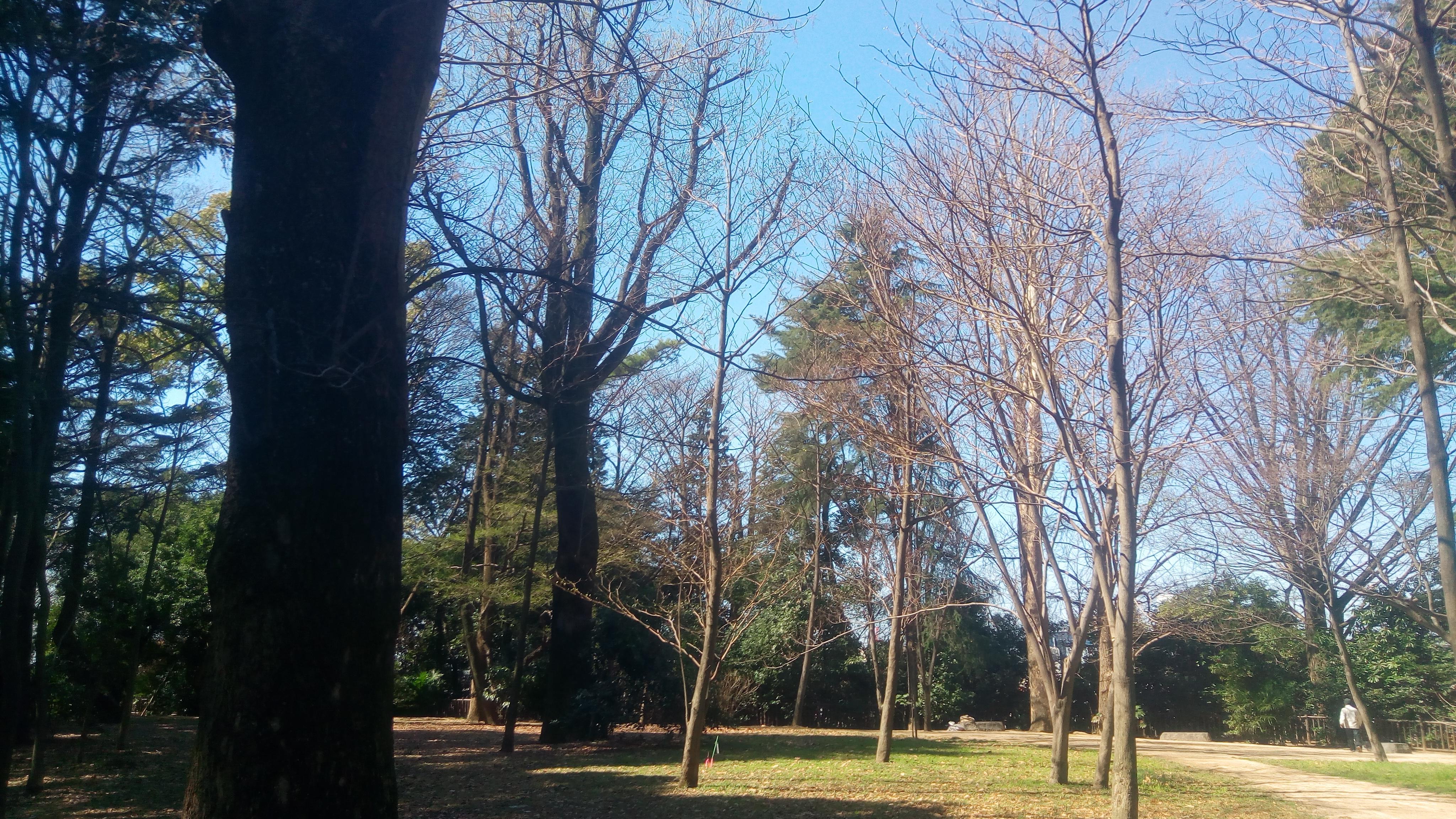 ウォーキング@江古田の森公園