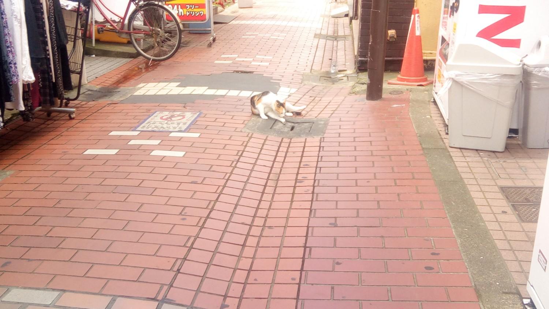 十条通り商店街の野良猫