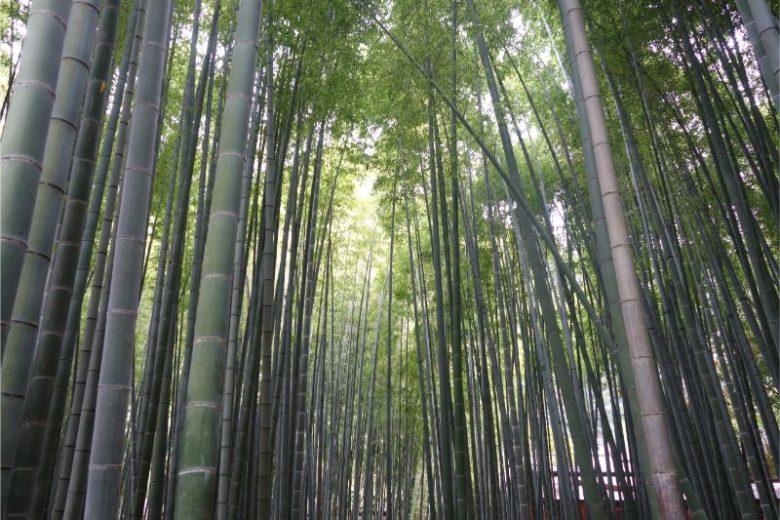鎌倉三十三観音めぐり(8月22日①)